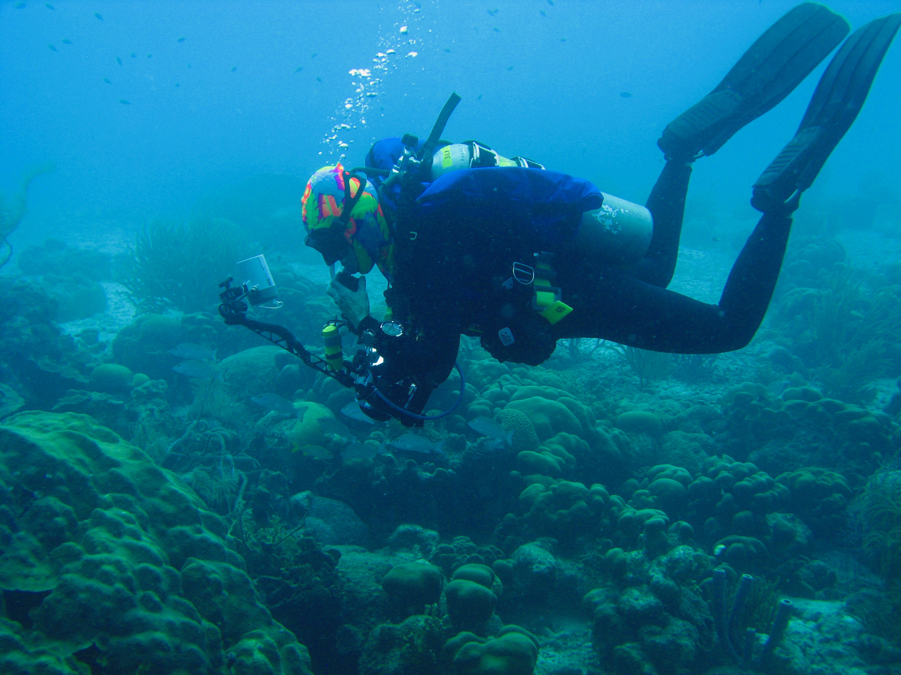 Scuba Dive Trips Swim And Scuba Long Islandswim And Scuba Long